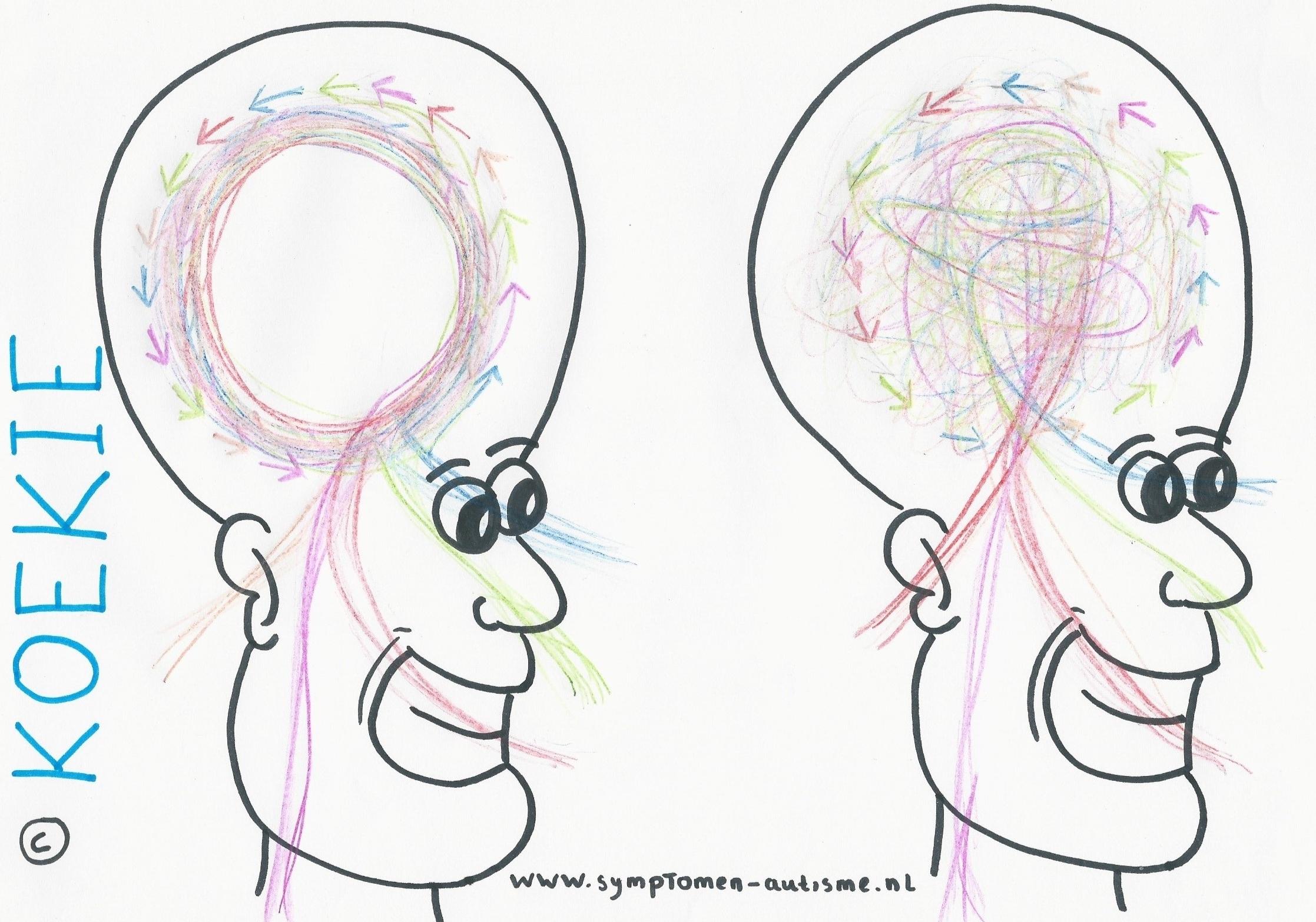 hersenen2.jpg